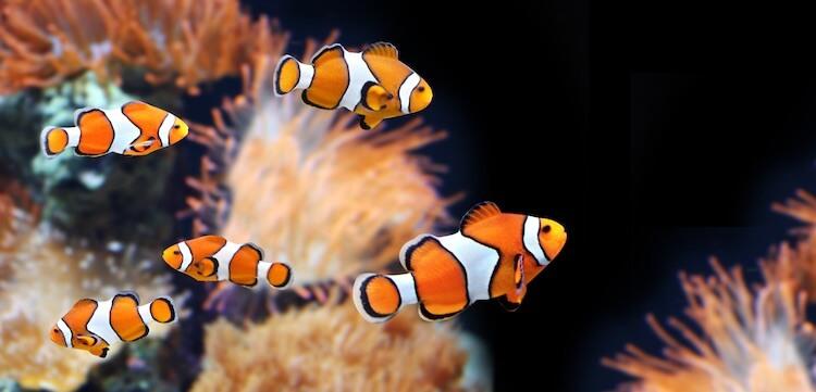Cool Fish Shoal