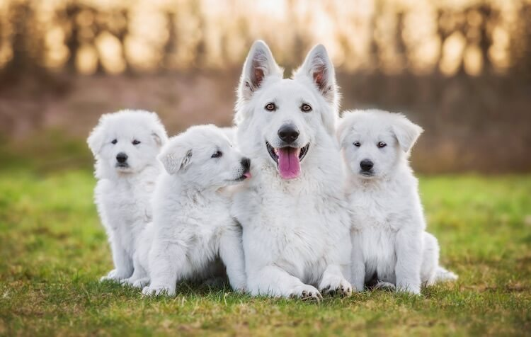 Cool Names for White Dogs