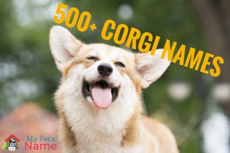 Corgi Names