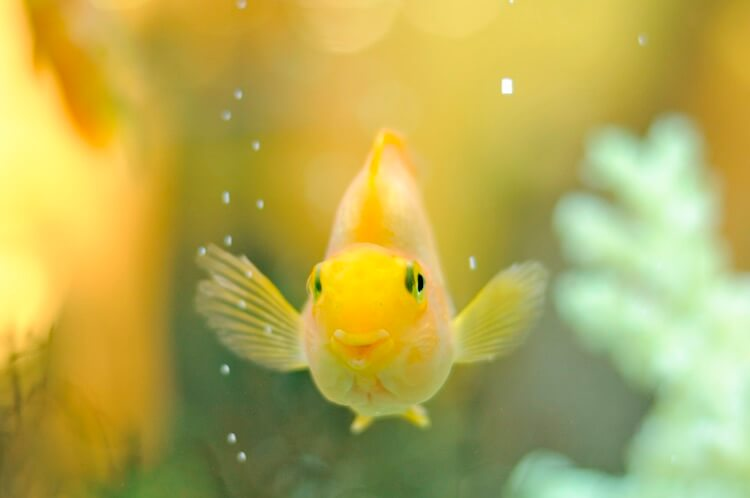 Cute Fish Picture