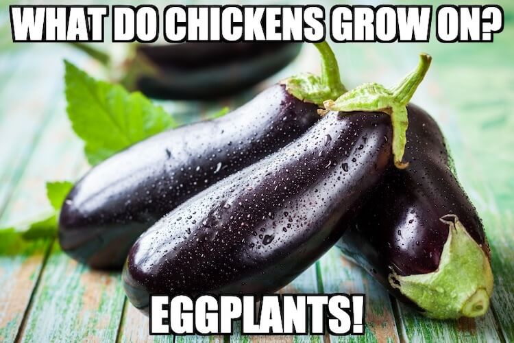 Eggplant Chicken Joke