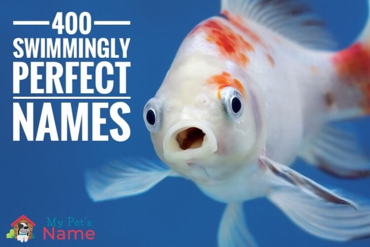 400+ Swimmingly Perfect Fish Names: Funny & Best Pet Fish Names – My