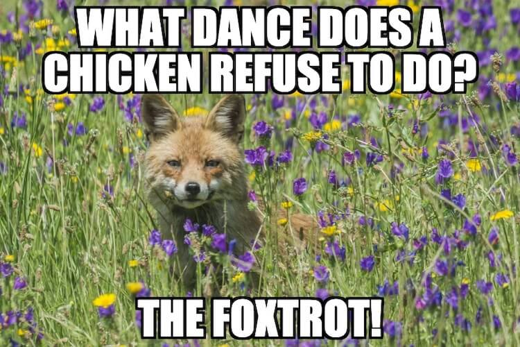 Fox and Chicken Pun
