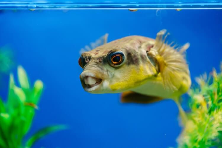 Funny Fish Face