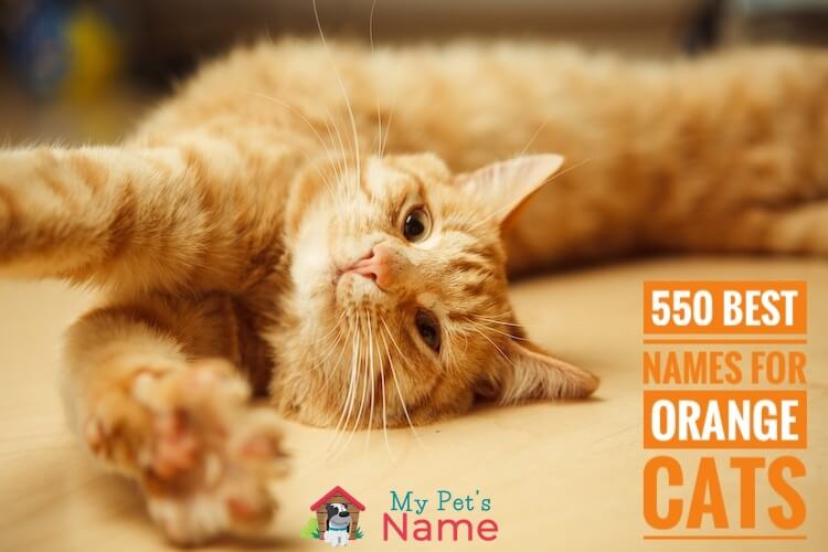 Names For Orange Cats