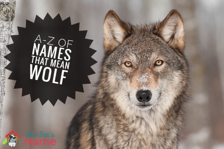 Names That Mean Wolf