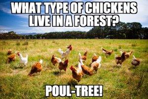 Poultry Pun