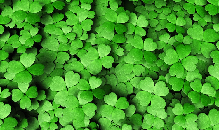 Shamrocks from Ireland