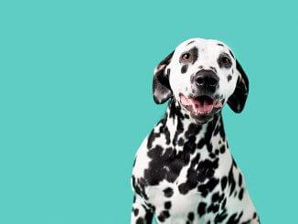 101 Dalmatian Names Feature