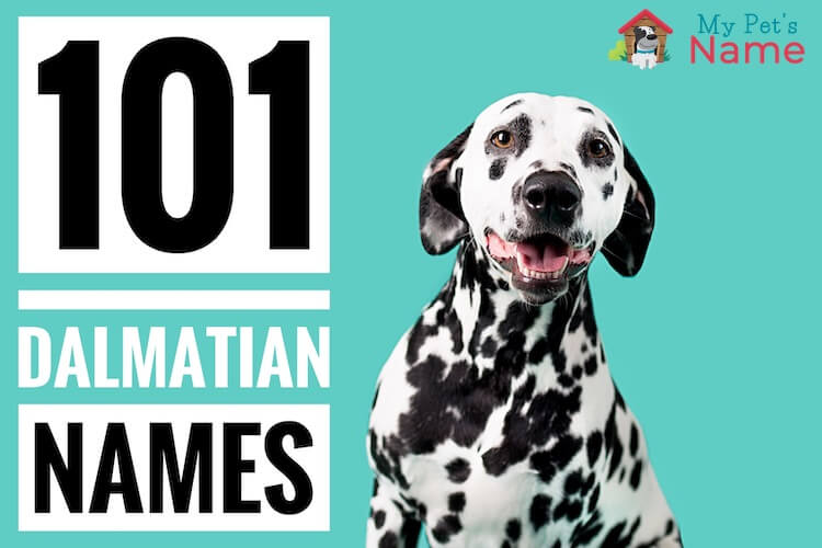 101 Dalmatian Names: A-Z List of Every Dog Name From 101