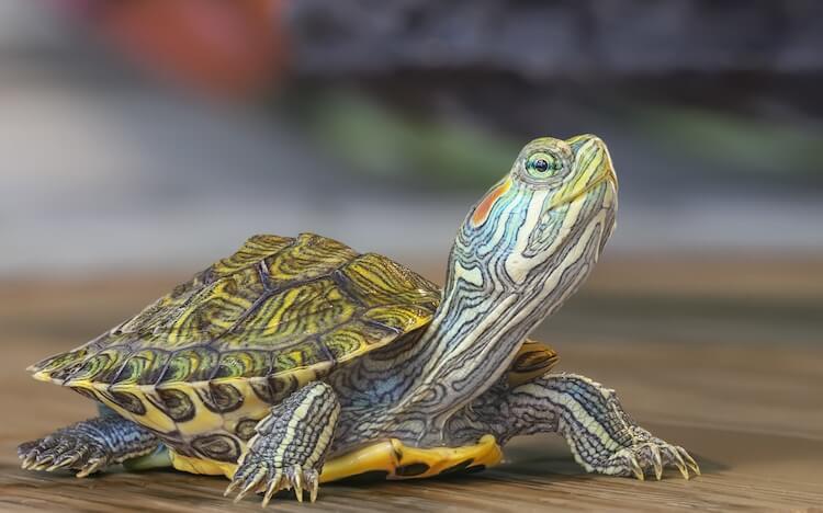 Best Turtle Names