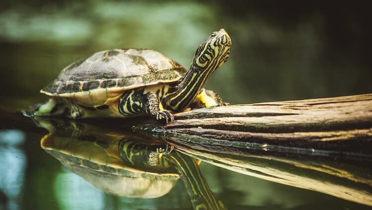Choosing A Turtle Name