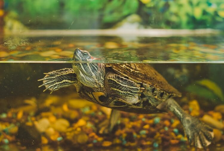 Cute Turtle Names