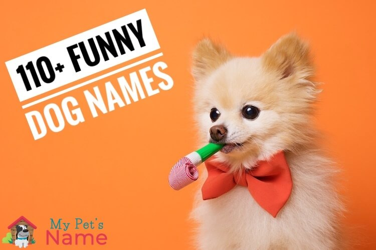Funny Dog Names: List Of 110+ Hilarious Names for Goofball