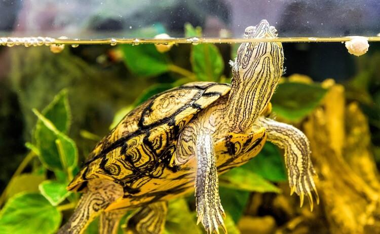 Good Turtle Names