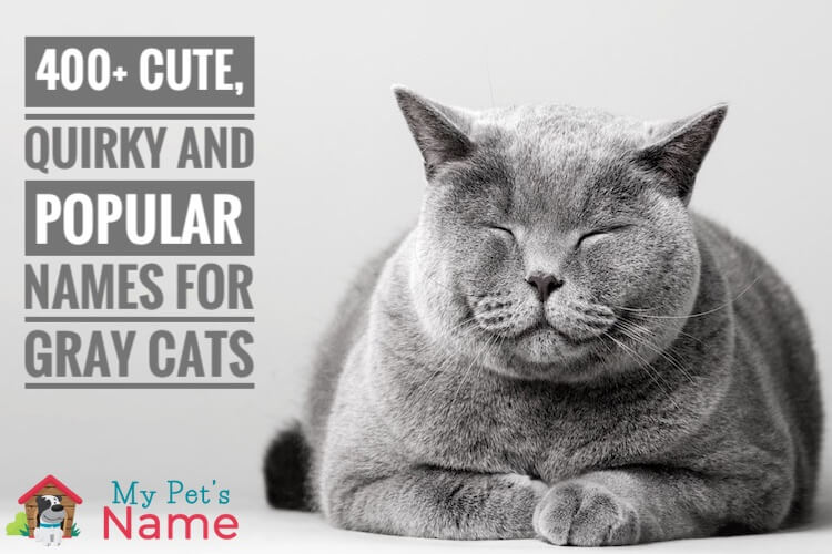 Gray Cat Names: 400+ Cute, Quirky and Popular Names For Gray