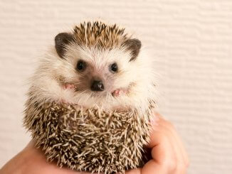 Hedgehog Names Feature