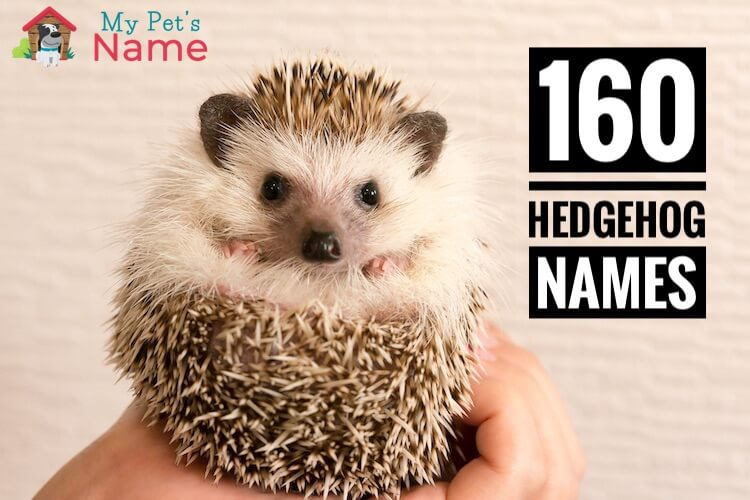 Hedgehog Names