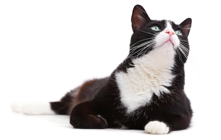 Male Black and White Cat Names