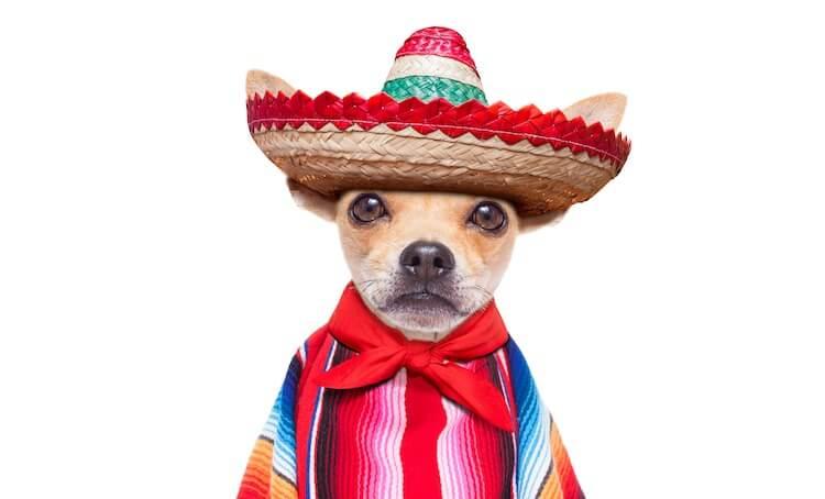 Mexican Chihuahua Names