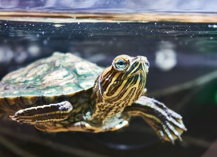 Pet Turtle Names
