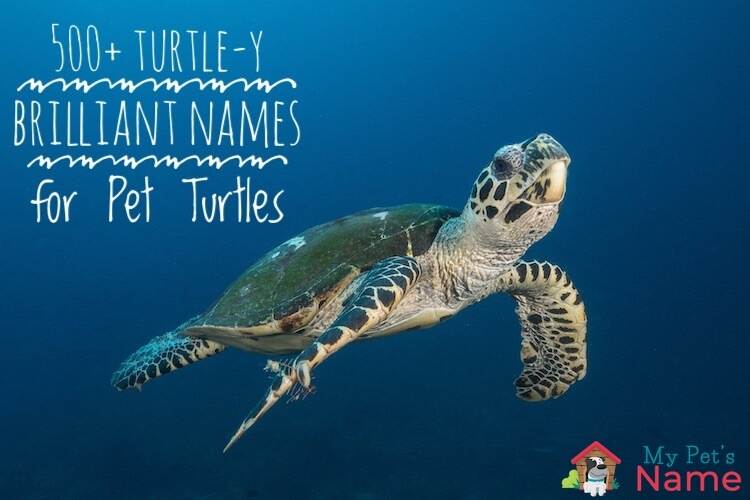 Turtle Names 500 Turtle Y Brilliant Names For Pet Turtles My Pet S Name