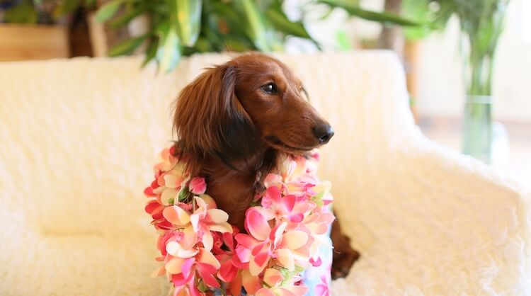 Cute Hawaiian Dog Names