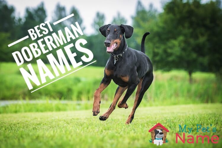 Doberman Names