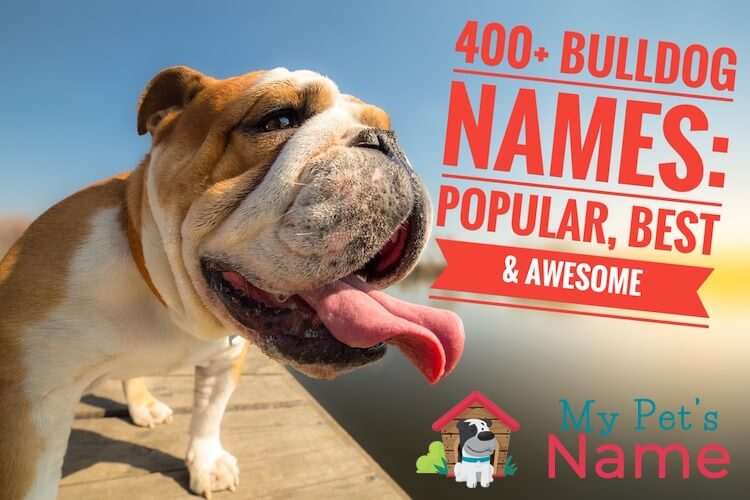 Bulldog Names