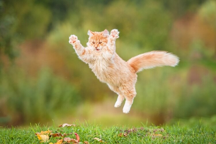 Funny Cat Jumping