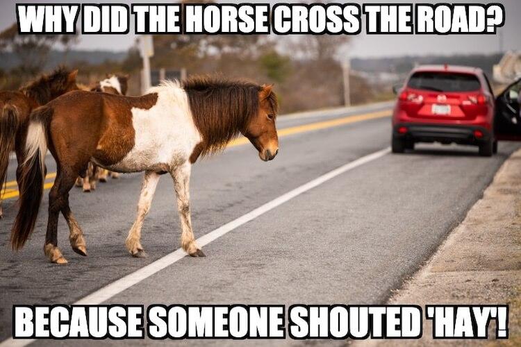 Horse Joke