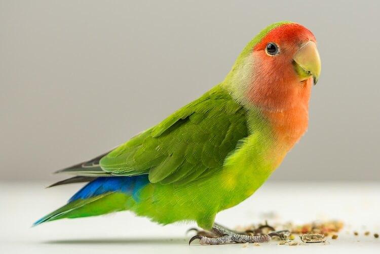 Names For a Female Bird