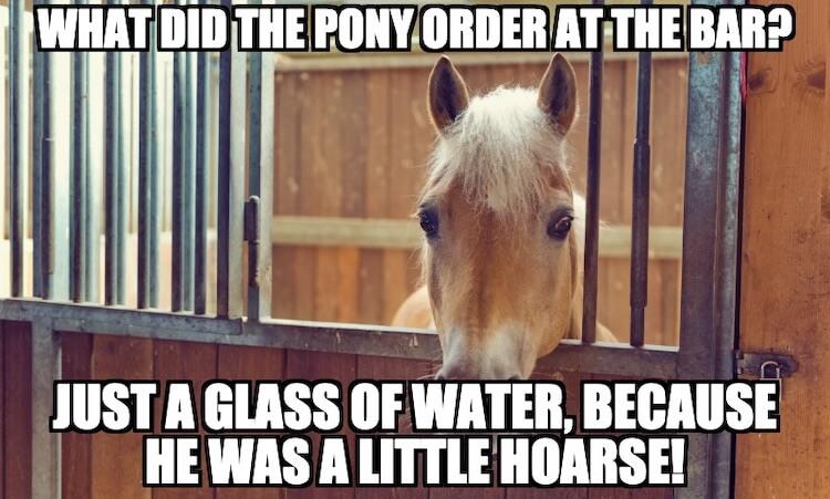 Pony Pun