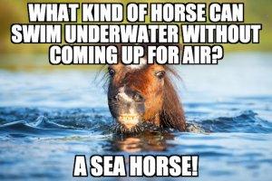 Sea Horse Pun