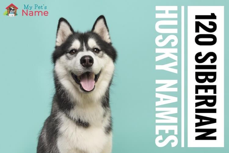 Siberian Husky Names