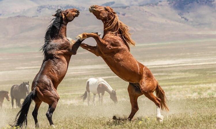 Unique Stallions