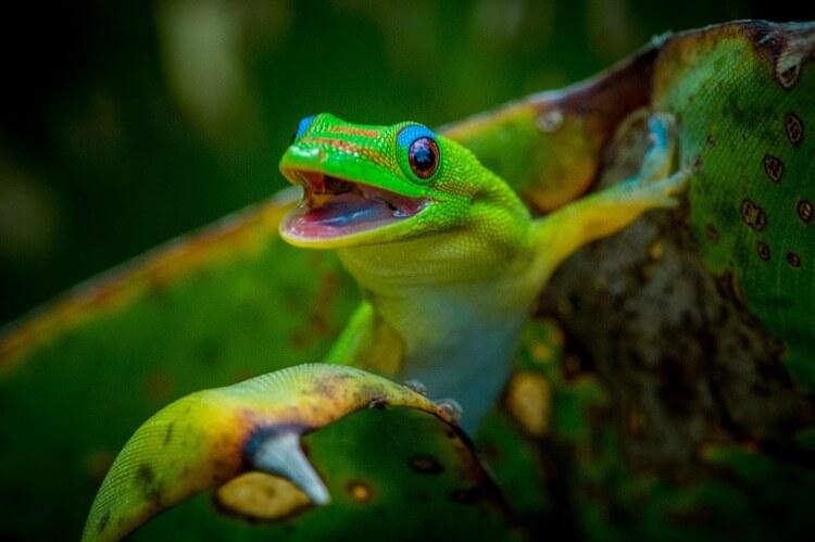 Cool Green Lizard