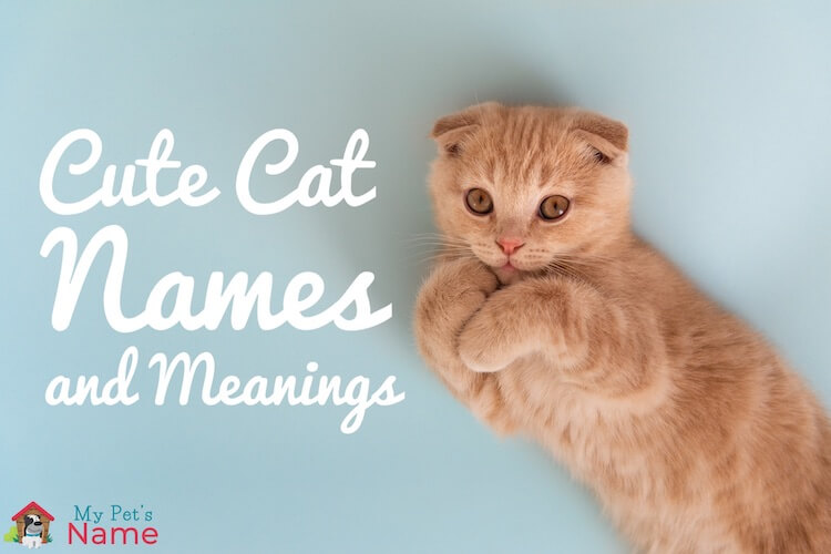 Cute Cat Names The Complete A To Z List Of Cute Names For Kittens My Pet S Name