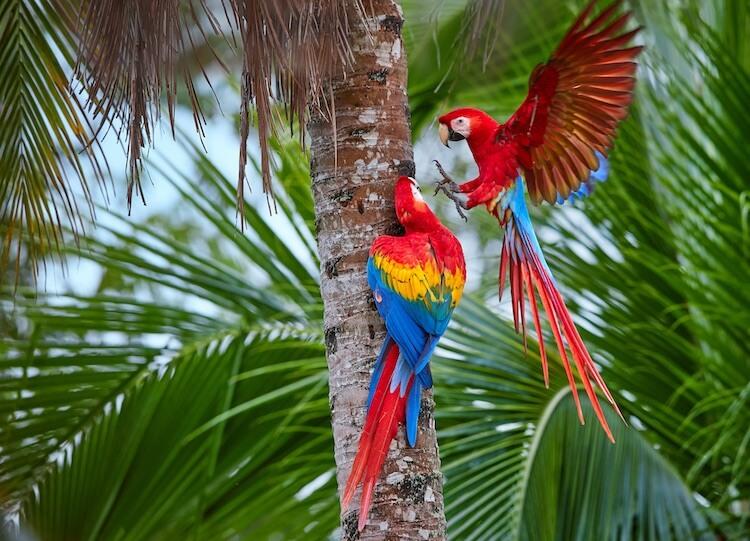 Cute Parrot