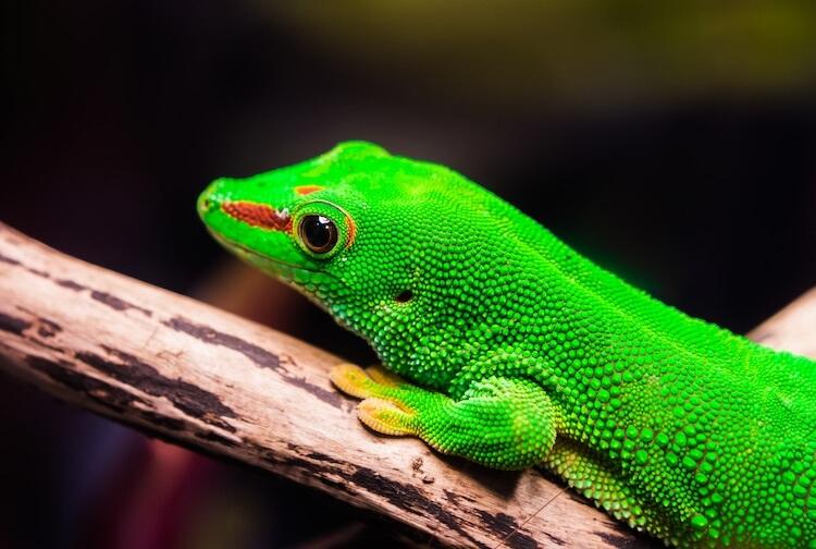 Cute Reptile