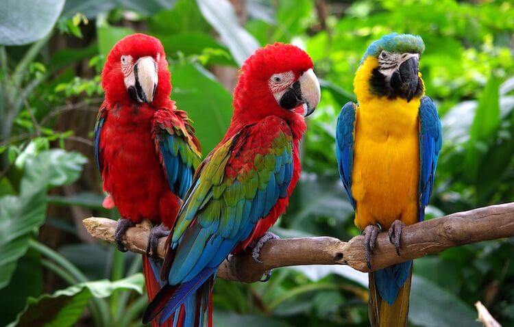 Famous Parrots