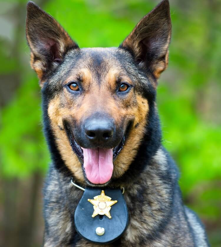 Famous Police Dog Names