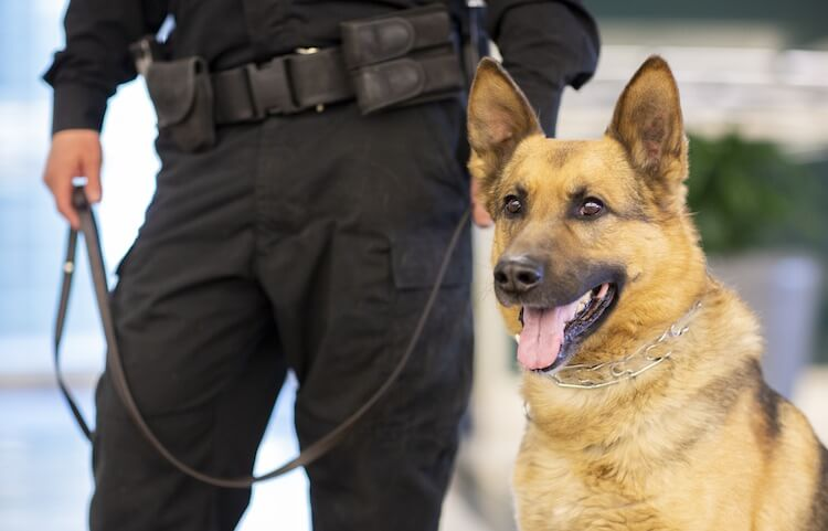 Female Police Dog