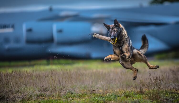 Flying Police Dog