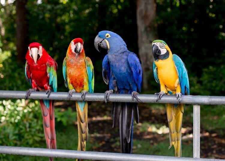 Four Funny Parrots