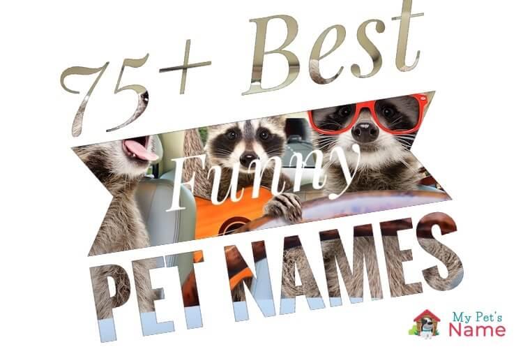Funny Pet Names
