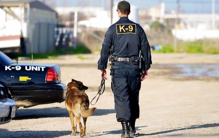 K-9 Dog Names