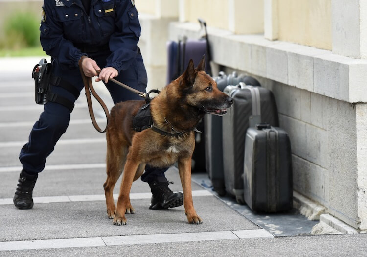 Male Police Dog