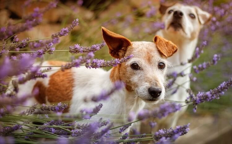 Uncommon Dog