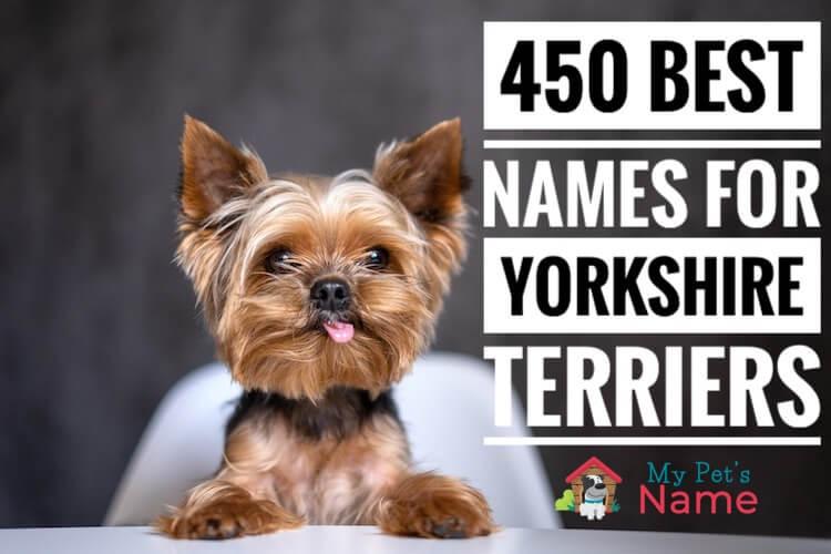 Yorkie Names